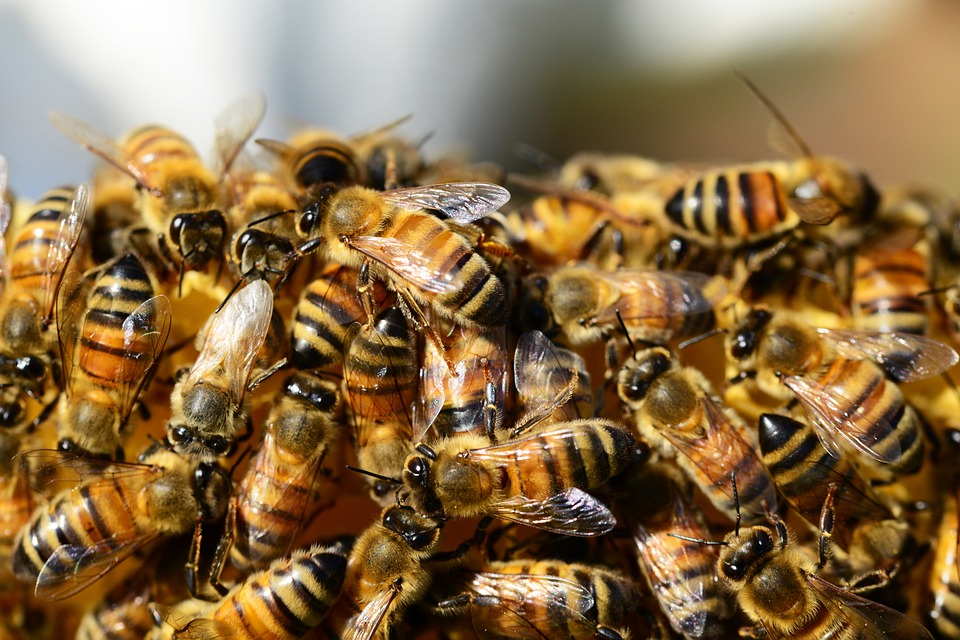 Българско изобретение спасява пчелите по света! Ето как допринасяме за живота!