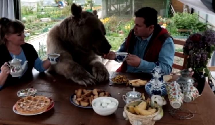 Това семейство си има мечка за домашен любимец! Вижте как тя е част от тяхното ежедневие! (ВИДЕО)