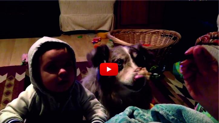 """ГОЛЯМ СМЯХ ПАДНА! Кучето успя да каже няколко пъти """"мама"""", а бебето не искаше! (ВИДЕО)"""