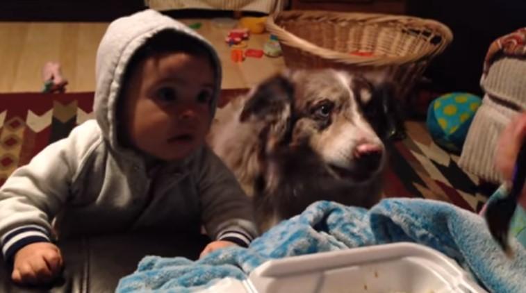 """Ще се забавлявате много! Кучето успя да каже няколко пъти """"мама"""", а бебето не искаше! (ВИДЕО)"""