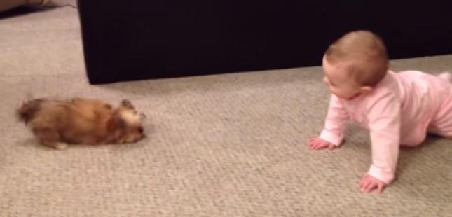 Сладко бебе и малко кученце застанаха муцуна срещу муцуна. Ще се смеете много, като видите реакциите им! (ВИДЕО)