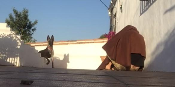 Той се опита да се скрие от кучето си, като се покри с одеяло. Дали кучето се върза на неговия номер? (ВИДЕО)