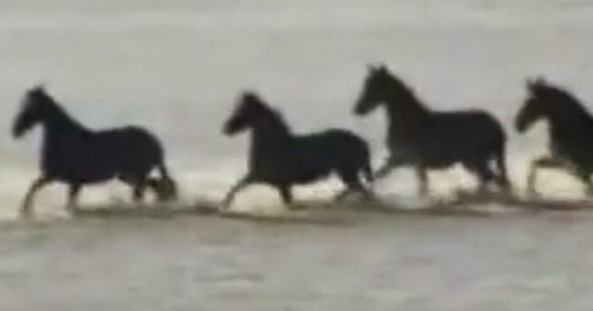 Ето как 7 смели жени успяха да спасят сто коня, хванати в капан! (ВИДЕО)
