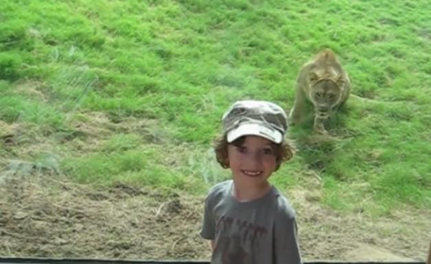 децата с диви животни