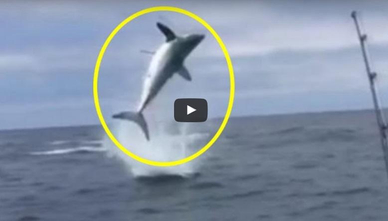 Тази ОГРОМНА акула изненада хората на яхтата. Вижте какви номера им направи тя! (ВИДЕО)