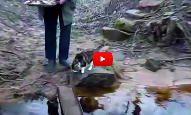 СУПЕР интелигиентна котка ни показва как трябва да се премине по мокро мостче, без да се намокрим! (ВИДЕО)