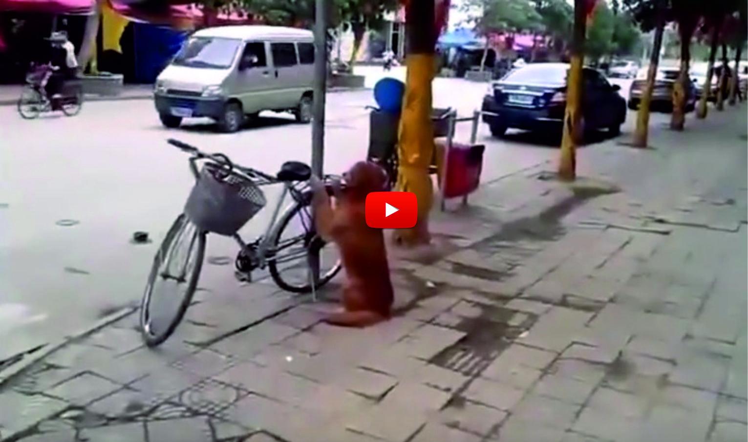 Куче пазеше колелото на стопанина си! Ще останете ИЗНЕНАДАНИ, когато видите как реагира, когато видя стопанина си! (ВИДЕО)