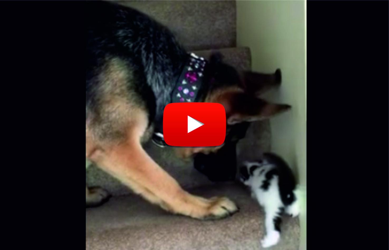 Куче помага на малко котенце да изкачи стълбите! ТОЛКОВА мила картинка отдавна не сте виждали! (ВИДЕО)