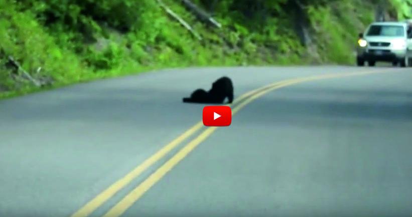 Както си шофираше, този мъж видя странно черно петно на пътя! Ще останете ИЗНЕНАДАНИ какво се оказа то! (ВИДЕО)