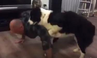 Много ще се смеете! Този мъж искаше да прави лицеви опори, но ето как реагира кучето му! (ВИДЕО)