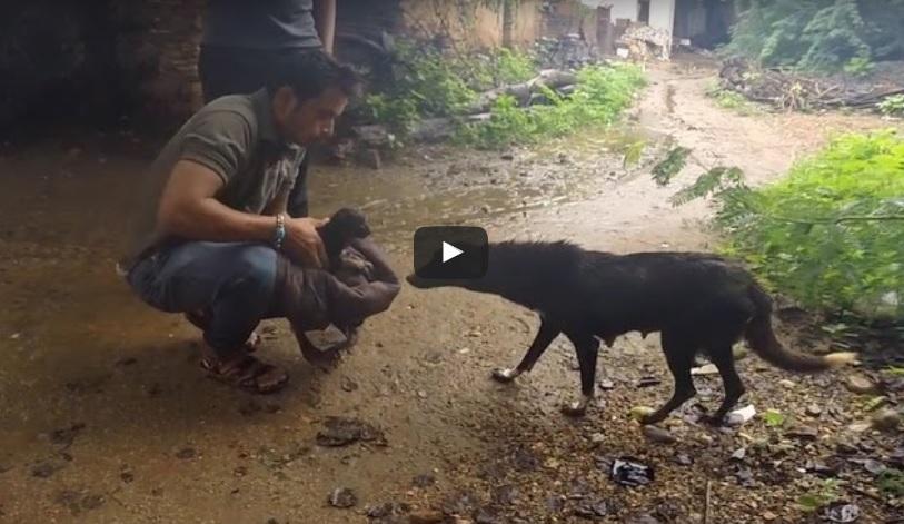 Този човек има страхотно СЪРЦЕ! Вижте как спаси малкото куче и го предаде на щастливата му майка! (ВИДЕО)