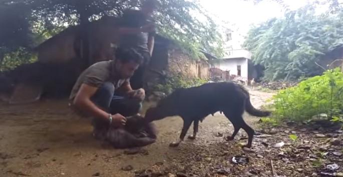 Този човек има златно сърце! Вижте как спаси малкото куче и го предаде на щастливата му майка! (ВИДЕО)