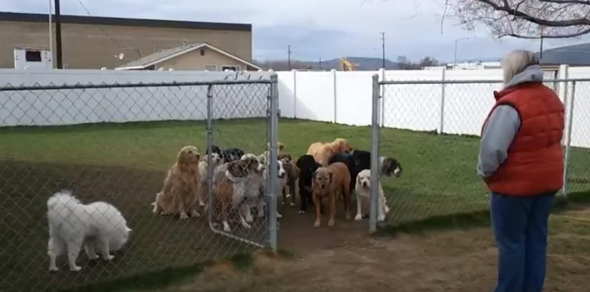 Стопанката беше научила кучетата да чакат, докато не ги извика поименно! Вижте дали й се подчиниха! (ВИДЕО)