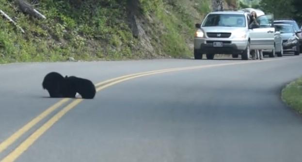 Както си шофираше, този мъж видя странно черно петно на пътя! Ще останете изумени какво се оказа то! (ВИДЕО)
