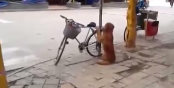 Куче пазеше колелото на стопанина си! Ще останете впечатлени, когато видите как реагира, когато видя стопанина си! (ВИДЕО)