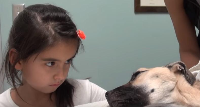 Трогателно! Видеото ще ви разплаче! Споделете как това прекрасно момиченце спаси това куче, което беше на крачка от смъртта! (ВИДЕО)