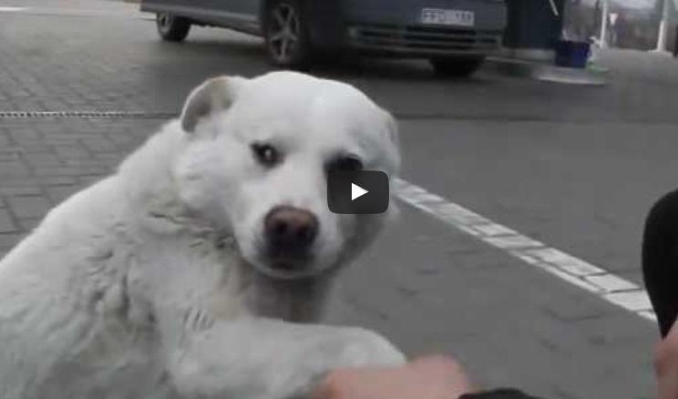 Докато наливаха бензин, тези хора попаднаха на страшно ДРУЖЕЛЮБНО бездомно куче. Реакцията му ги остави без дъх! (ВИДЕО)