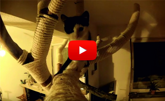 ГЕНИАЛНО изобретение ще спаси мебелите от котешките лапи! Вижте как беше изобретено стъпка по стъпка! (ВИДЕО)