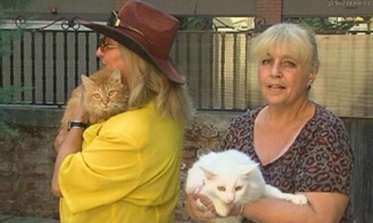 Домашни любимци скараха съседи, намеси се и съдебен изпълнител. Научете каква е съдбата на 10 котки и 2 кучета!