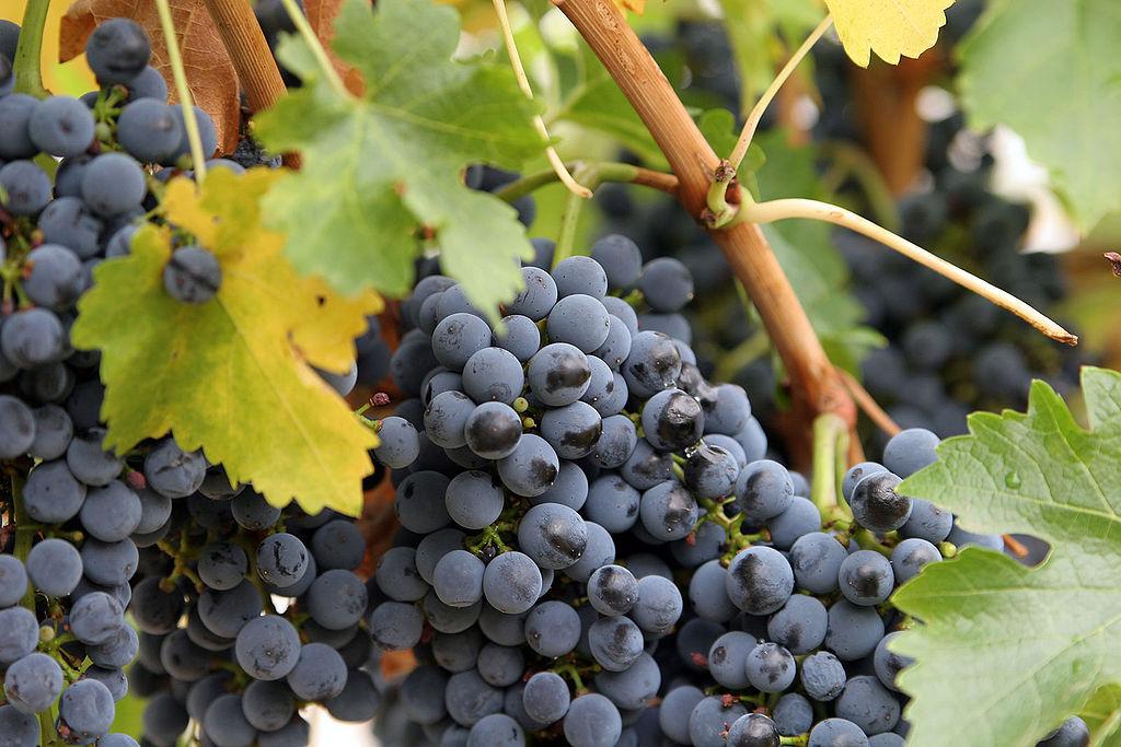 """На вниманието на любителите на хубаво вино! Нова измама на борсата за грозде в """"Дружба"""", пазете се"""