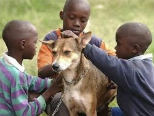 Трогателната история на едно куче. Отделете й минутка от времето си, заслужава си! (ВИДЕО)