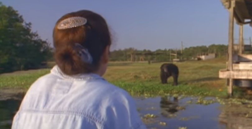 """Жената възкликна към шимпанзето: """"Хей, помниш ли ме?"""". Вижте го как реагира! (ВИДЕО)"""