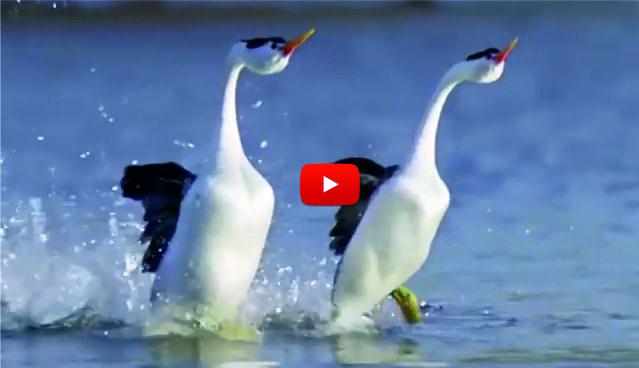 Това видео има скрит СМИСЪЛ. Щом го видите, ще бъдете изненадани от силата на природата! (ВИДЕО)