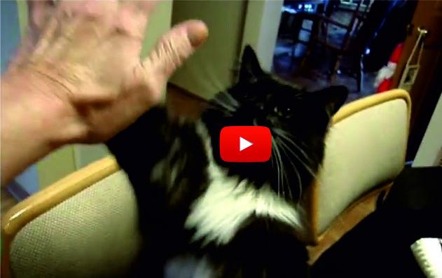 Това се казва ИНТЕЛИГЕНТНА котка! Въпреки, че е прибрана от приют, тя определено ни подлудява с номерата си! (ВИДЕО)