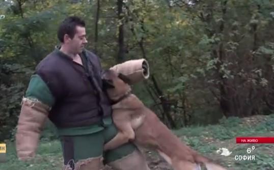 Български кучета станаха световни шампиони. Вижте как се обучава антитерорист на 4 лапи (ВИДЕО)