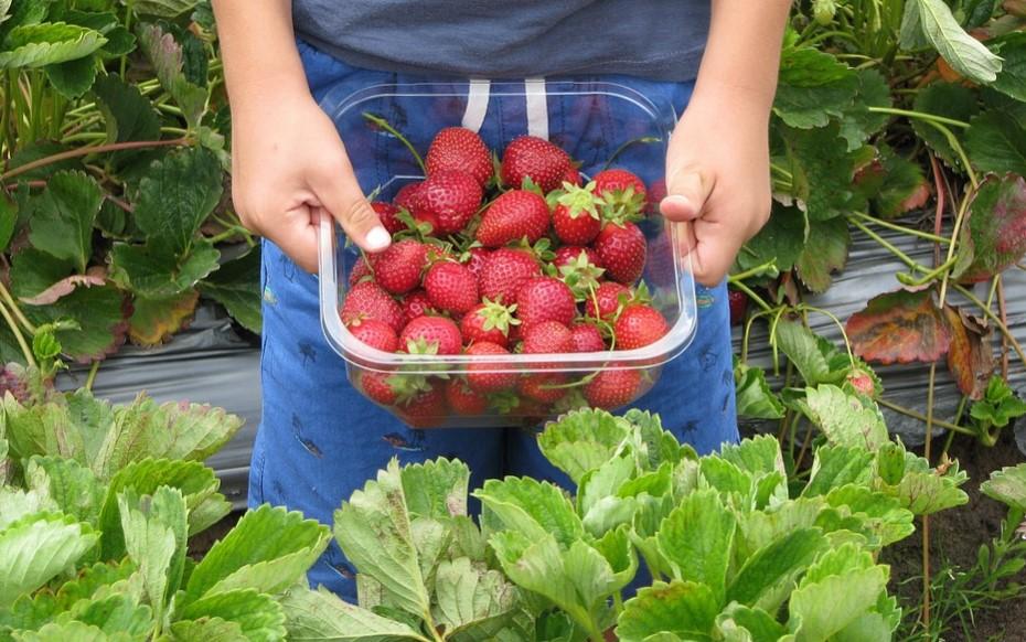 Български адвокат отговори на британския депутат, който унизи нашите берачи на ягоди