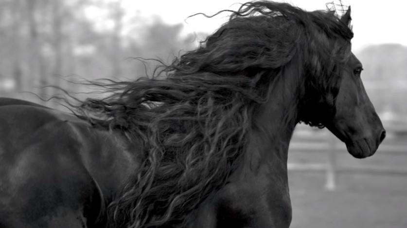 Той си заслужи славата! Вижте най-красивия кон на света (СНИМКИ и ВИДЕО)