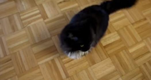 Това се казва интелигентна котка! Въпреки, че е прибрана от приют, тя определено ни подлудява с номерата си (ВИДЕО)