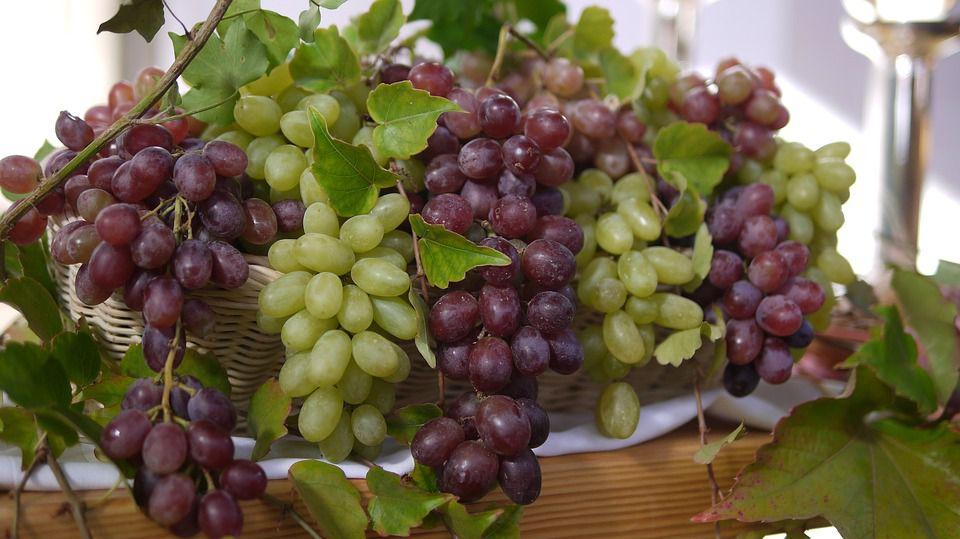 Прочетете и разберете как гроздето ви да остане свежо и сочно през зимните месеци