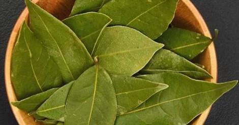 Ето какви чудеса може да направи дафиновият лист и да спре вашата неприятна кашлица
