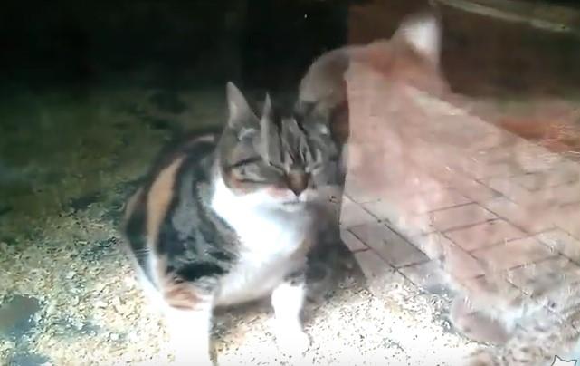 Всеки ден тази котка се вмъква в двора на зоопарка. Работниците не можаха да повярват, когато разбраха причината (ВИДЕО)