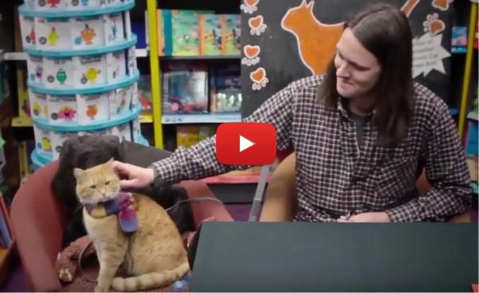 Едно котенце се доближи до чаровен уличен МУЗИКАНТ! Но ето как се промени техният живот впоследствие! (ВИДЕО)