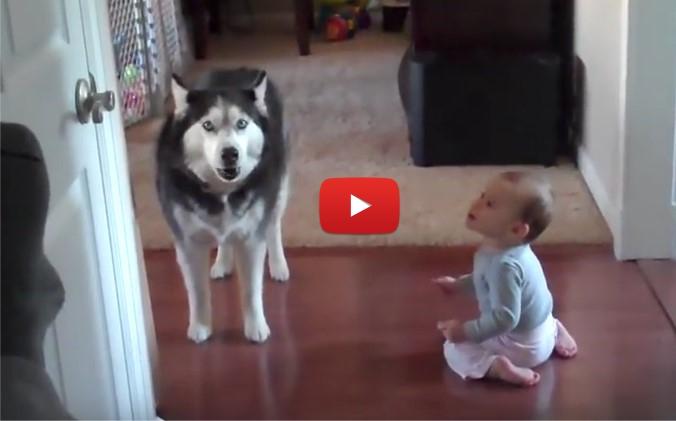 ПЪЛНА ЛУДНИЦА! Майката влиза в стаята и заварва БЕБЕТО да си говори с КУЧЕТО! (ВИДЕО)