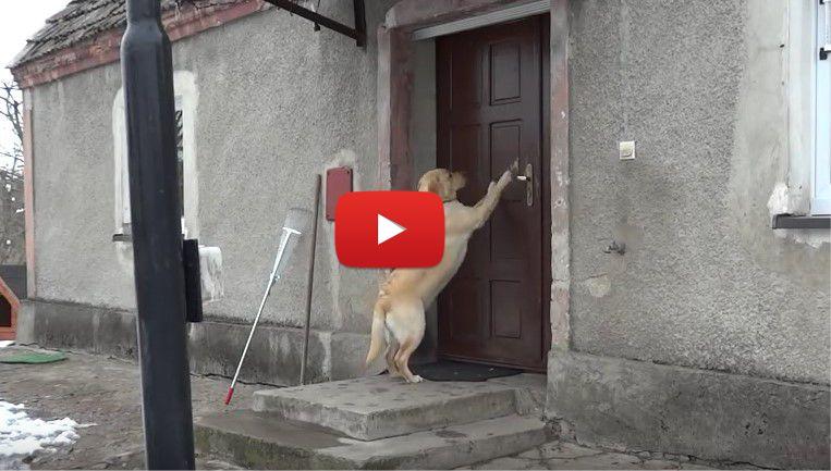 Никой не искаше да отваря вратата на това куче. Но неговата съобразителност УЧУДИ ЦЯЛ СВЯТ! (ВИДЕО)