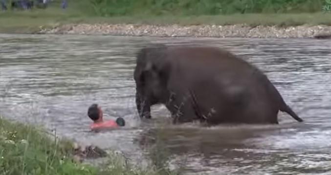 Слон спасява човек от буйната река и му помага да се закрепи! Насладете се на кадрите (ВИДЕО)