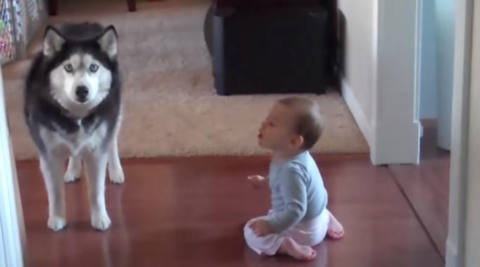 Пълна лудница! Майката влиза в стаята и заварва бебето да си говори с кучето (ВИДЕО)
