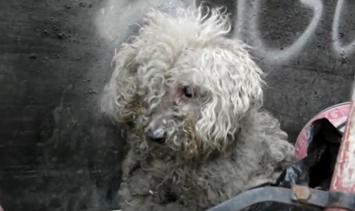 Когато този непознат човек намери куче, което живееше в боклука, не очаквах тази неочаквана развръзка (ВИДЕО)