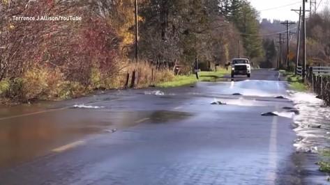 Ще останете без думи, когато видите какво се случи при едно наводнение в Сиатъл (ВИДЕО)