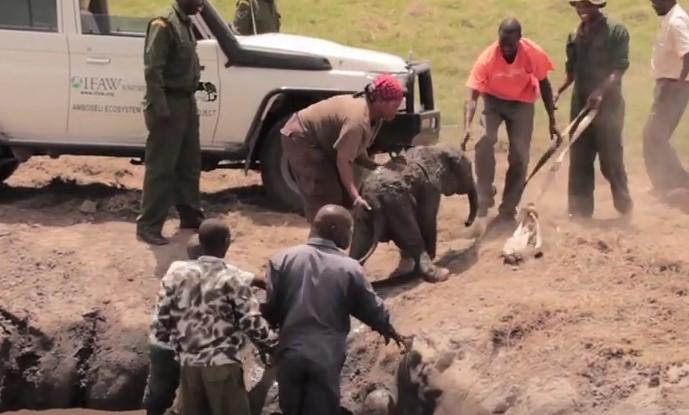 Ще се размажете от кеф! Те извадиха от калта слонче само на 5 дена, вижте реакцията на слоницата (ВИДЕО)