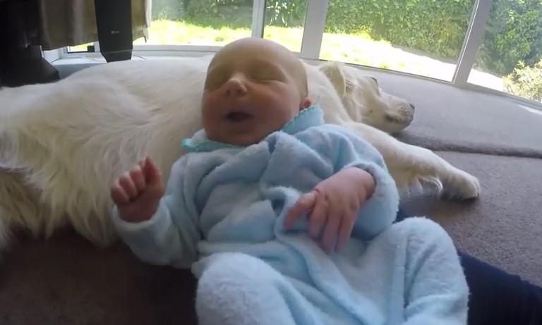 Изключително посрещане на новородено бебе от домашния любимец! Ще останете очаровани (ВИДЕО)