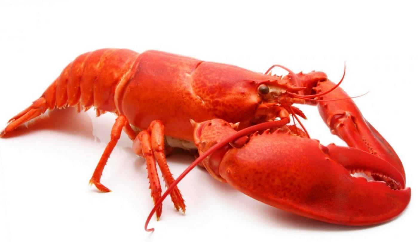 Да се поглезим малко… Страховито вкусна рецепта за печен пълнен омар със сос термидор! Ще си оближете пръстите