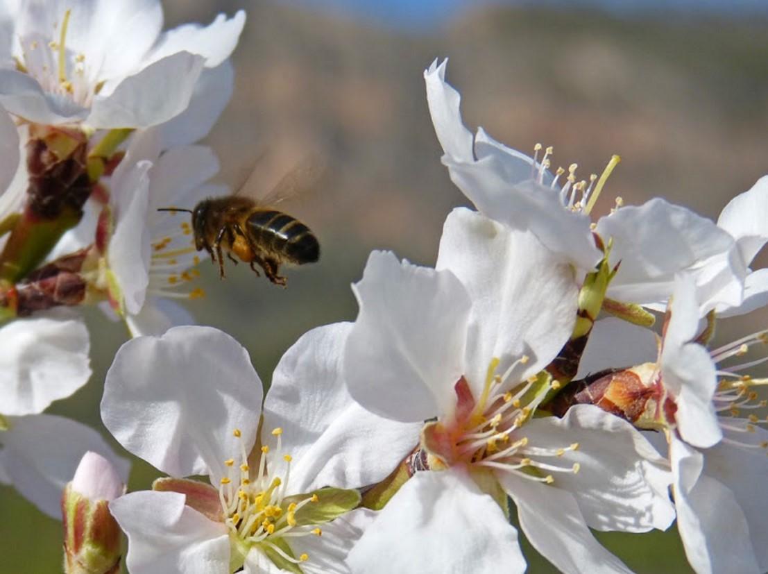 Българи с впечатляващо откритие за спасяването на пчелите! Успех на българския проект! Вижте решението на проблема