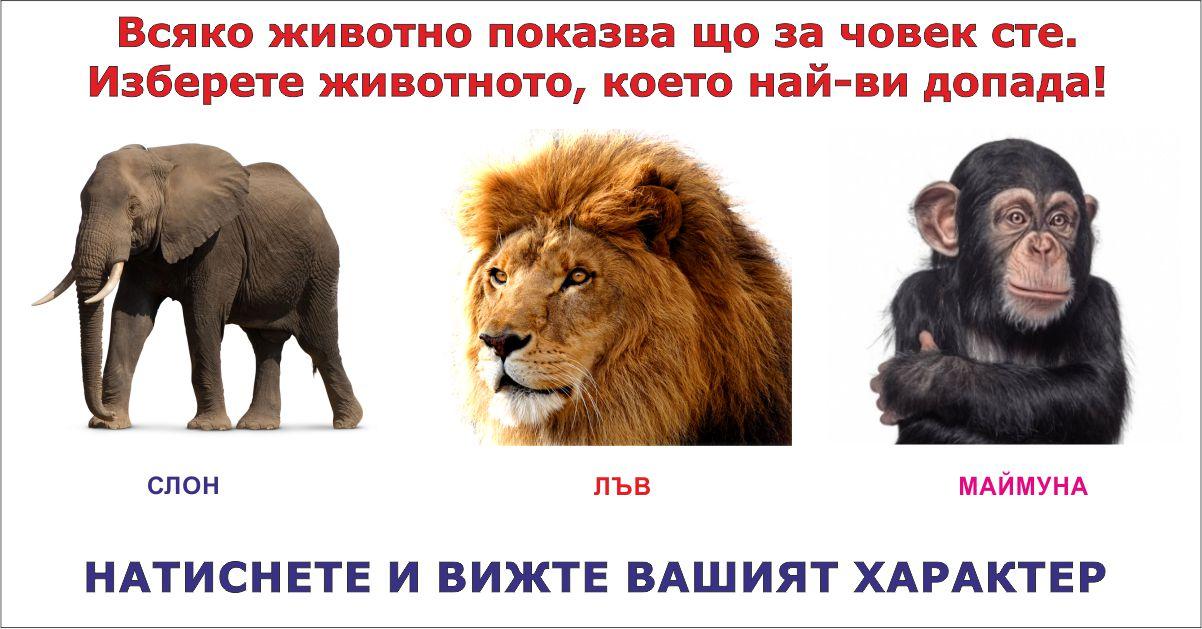 Животните разкриват характера ни. Изберете едно от трите, за да видите какъв човек сте