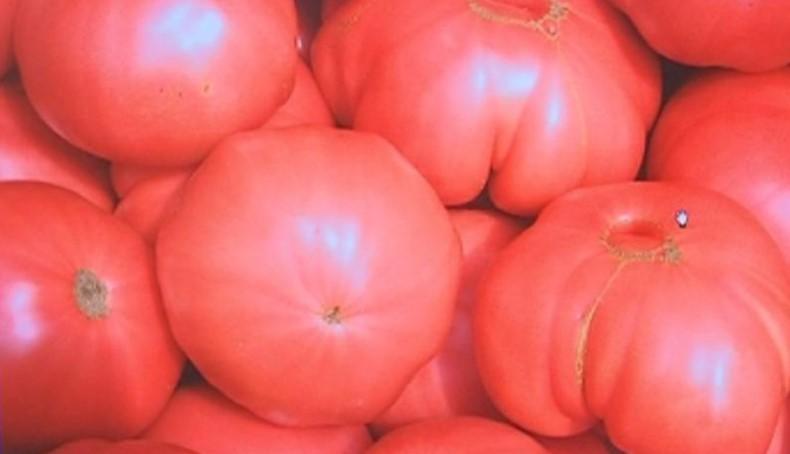 Българският розов домат от Куртово Конаре иска от ЕС защитен произход и наименование