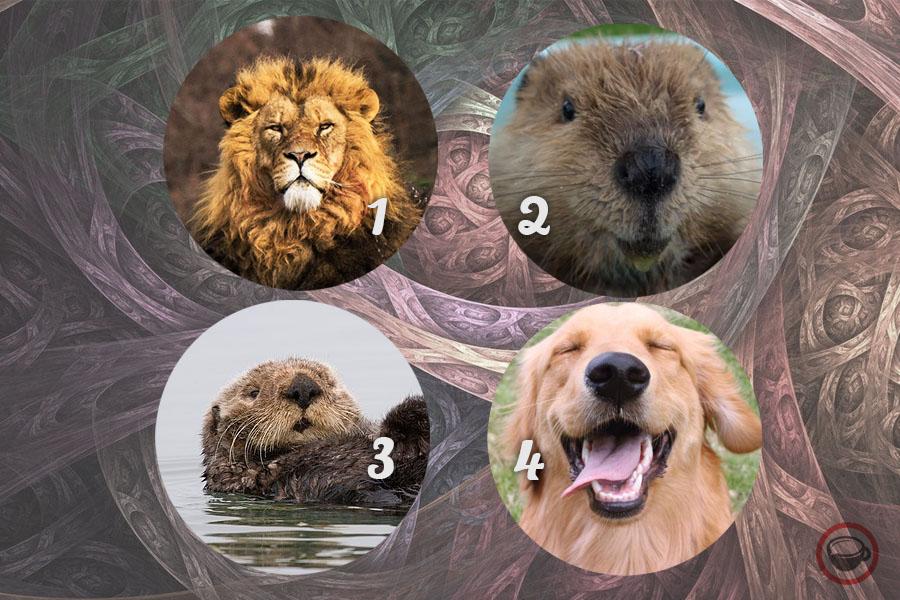 тест животни