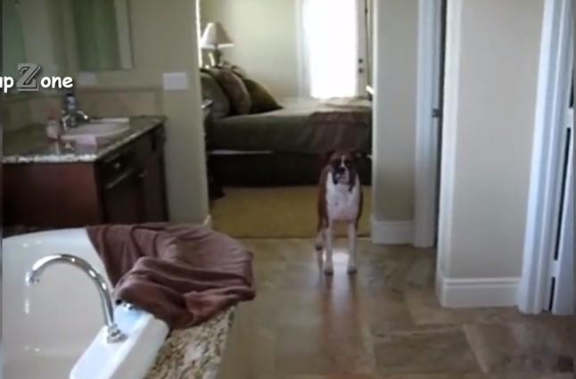 Някои домашни кучета обичат водата, ама други съвсем не искат да бъдат къпани. Вижте и се посмейте (ВИДЕО)